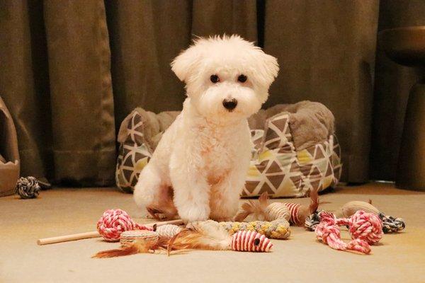 重庆渝融豪生酒店 打造重庆首家可带宠物入住的酒店